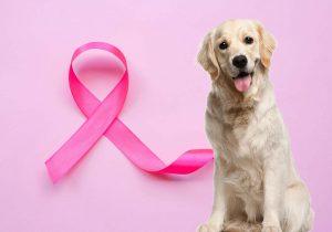 Câncer de mama em animais