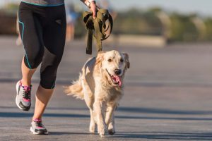 Prática de exercício com cães