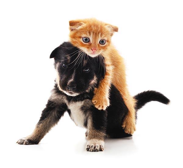 Cão e gato brincando